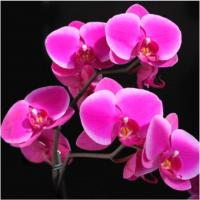 Набор алмазной вышивки Sima-Land Орхидеи / 5525026 -