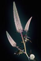Картина на стекле ArtaBosko WBR-11-704-04 (40x60) -