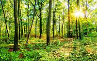 Фотообои листовые Citydecor Солнечный лес (400x254) -