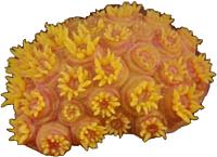 Декорация для аквариума HAGEN MSH-002-Y (оранжевый) -