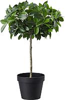 Искусственное растение Ikea Фейка 903.952.95 -