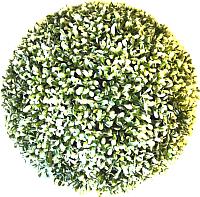 Искусственное растение Green Fly Самшит Вальс / С-5-39 -
