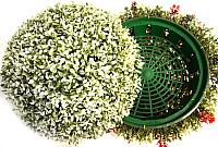 Искусственное растение Green Fly Самшит полусфера Вальс / СП-5-39 -