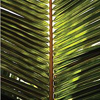 Картина на стекле Orlix Зеленый 3 / GL-00867 -