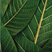 Картина на стекле Orlix Зеленый 1 / GL-00865 -