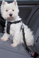 Ремень безопасности для собак Trixie 1288 (ХS, Black) -