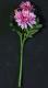 Искусственный цветок Orlix Астра / 06-123-V -