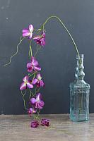 Искусственный цветок Orlix Орхидея / 06-081-O -