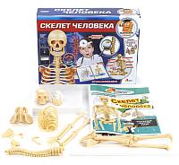Набор для опытов Играем вместе Скелет человека / TXL-117-R -