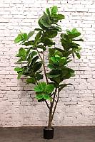 Искусственное растение Orlix Фикус Pandurata / 06-093-D -